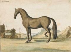 Eisenberg Prints of Four Horses by Baron DEisenberg - 1778849