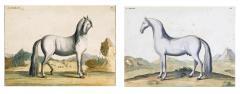 Eisenberg Prints of Four Horses by Baron DEisenberg - 1778850