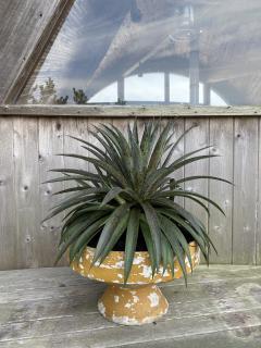 Eternit SA Willy Guhl rare shape Planter pair - 2123939
