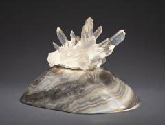 Studio Greytak Turtle Aragonite Shell Formed Lighted Sculpture - 2045683