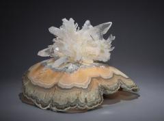 Studio Greytak Turtle Aragonite Shell Formed Lighted Sculpture - 2045701