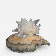 Studio Greytak Turtle Aragonite Shell Formed Lighted Sculpture - 2047610