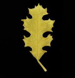 Tiffany and Co Tiffany Co Oak Leaf Brooch Pin - 1159890