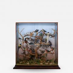 19th C Taxidermy Ornithological Showcase Paradise by Rowland Ward  - 2002620