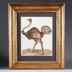 A 17th century drawing of an ostrich - 1001240