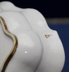 A Miessen Porcelain Shaped Basin - 77062