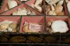 A Regency Penwork Casket Decorated With Depictions Of Seashells - 1374859