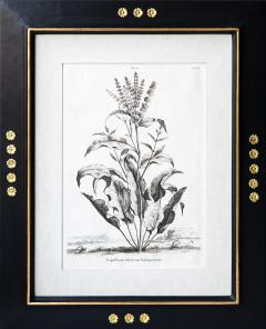 Abraham Munting SET OF 6 BLACK AND WHITE BOTANICAL PRINTS BY ABRAHAM MUNTING 1626 1683  - 1271962