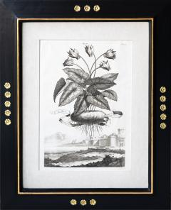 Abraham Munting SET OF 6 BLACK AND WHITE BOTANICAL PRINTS BY ABRAHAM MUNTING 1626 1683  - 1271963