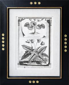 Abraham Munting SET OF 6 BLACK AND WHITE BOTANICAL PRINTS BY ABRAHAM MUNTING 1626 1683  - 1271964