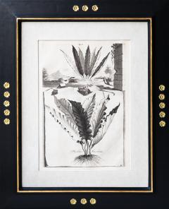 Abraham Munting SET OF 6 BLACK AND WHITE BOTANICAL PRINTS BY ABRAHAM MUNTING 1626 1683  - 1271965