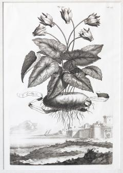 Abraham Munting SET OF 6 BLACK AND WHITE BOTANICAL PRINTS BY ABRAHAM MUNTING 1626 1683  - 1271967
