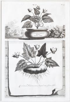Abraham Munting SET OF 6 BLACK AND WHITE BOTANICAL PRINTS BY ABRAHAM MUNTING 1626 1683  - 1271968