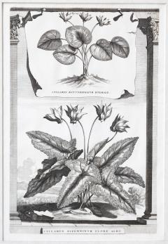 Abraham Munting SET OF 6 BLACK AND WHITE BOTANICAL PRINTS BY ABRAHAM MUNTING 1626 1683  - 1271970