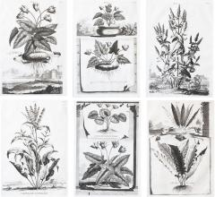 Abraham Munting SET OF 6 BLACK AND WHITE BOTANICAL PRINTS BY ABRAHAM MUNTING 1626 1683  - 1273288