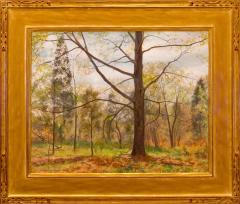 Alexander Farnham First Bloom  - 1310557