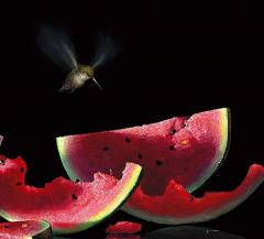 Another Bite Contemporary Still Life Giclee Print by Dario Campanile - 2011294