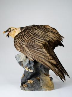 Bearded Vulture Gypaetus barbatus II A cites dd 09 03 2019 - 2041612