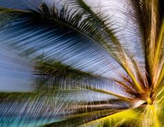 Chico Kfouri Tropical Photography 2019 by Brazilian Photographer Chico Kfouri - 1239410