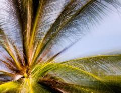 Chico Kfouri Tropical Photography 2019 by Brazilian Photographer Chico Kfouri - 1239438
