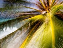 Chico Kfouri Tropical Photography 2019 by Brazilian Photographer Chico Kfouri - 1239439