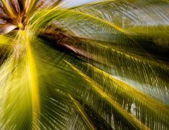 Chico Kfouri Tropical Photography 2019 by Brazilian Photographer Chico Kfouri - 1239440