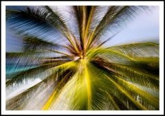 Chico Kfouri Tropical Photography 2019 by Brazilian Photographer Chico Kfouri - 1239441