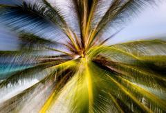 Chico Kfouri Tropical Photography 2019 by Brazilian Photographer Chico Kfouri - 1239532