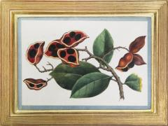 Chinese School Group of Eight Exotic Fruits on Pith Paper - 1958237