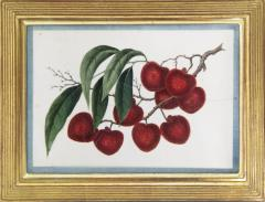 Chinese School Group of Eight Exotic Fruits on Pith Paper - 1958238