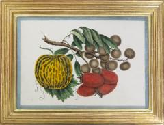 Chinese School Group of Eight Exotic Fruits on Pith Paper - 1958242