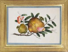 Chinese School Group of Eight Exotic Fruits on Pith Paper - 1958243