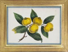 Chinese School Group of Eight Exotic Fruits on Pith Paper - 1958244