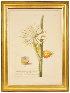 Christoph Trew A Set of Three engraved botanical plates - 781461