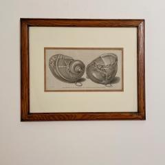 Circa 19th Century Baroque Sea Shell Drinking Cups Engraving - 1849694