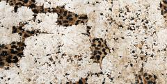 Contemporary Hand Knotted Leopard Wool and Silk Rug in Brown Cream and Black - 1391516