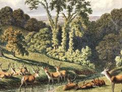 Continental School Deer by Stream  - 759046