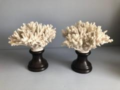 Coral Decorations on Stands - 673513