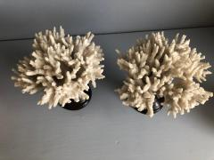 Coral Decorations on Stands - 673514