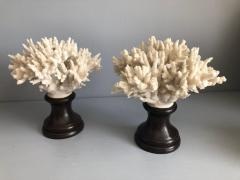 Coral Decorations on Stands - 673515