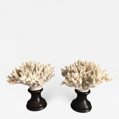 Coral Decorations on Stands - 673938