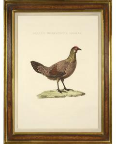 Cornelius Nozeman Pair of Chickens - 815645