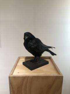 Crow - 1702378
