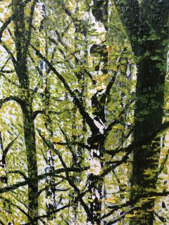 David J Williams Spring Birches - 1613752