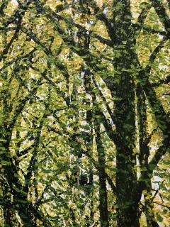 David J Williams Spring Birches - 1613753