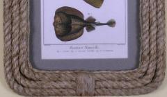 Denis Diderot Pl LII 1 Angelfish 2 Sting Ray 3 Torpedo - 1577482