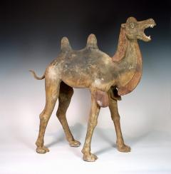Early Tang Dynasty Camel - 1939127
