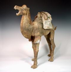 Early Tang Dynasty Camel - 1939128
