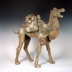 Early Tang Dynasty Camel - 1939129