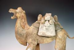 Early Tang Dynasty Camel - 1939130